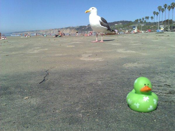 La Jolla Beach San Diego, CA Seagull