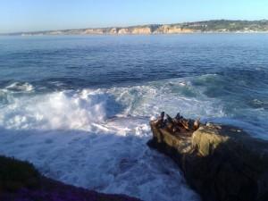 La Jolla Cove sea lions San Diego CA