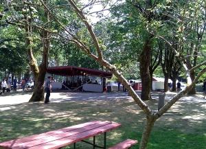 A tree at Vasa Park