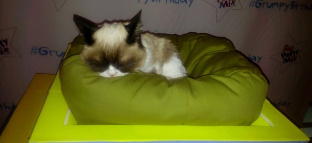 Grumpy-Cat-sleeps-on-top-of-her-birthday-cake.jpg